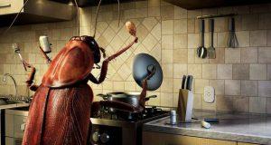 Как да се отървете от малките хлебарки във вашата къща