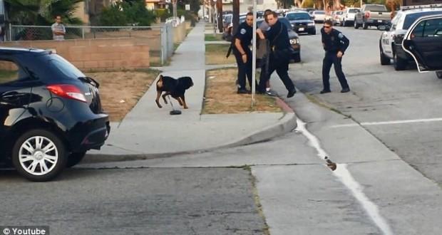 Полицай застреля и уби куче, което се опита да защити собственика си (ВИДЕО)